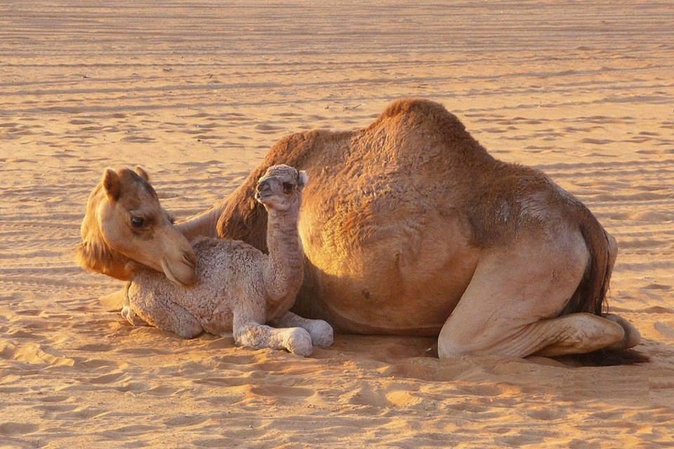 4 Days Fes Desert Tour